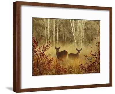 Foggy Deer