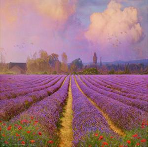 Lavender II by Chris Vest