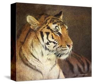 Tiger by Chris Vest
