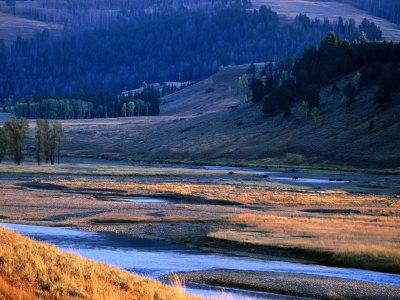 Lamar River Valley with Bison Crossing in Distance, Yellowstone National Park, U.S.A.