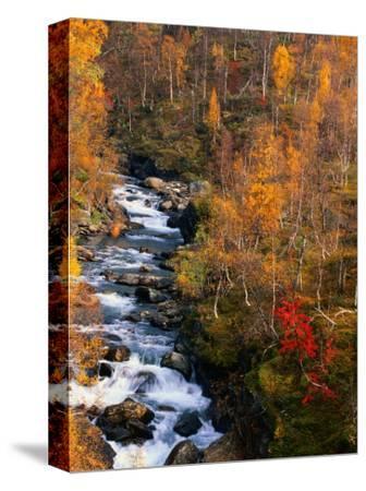Mountain Stream in Autumn, Vindelfjallen Nature Reserve, Sweden
