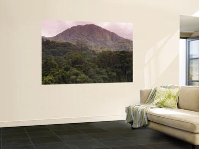 Rainforest on Mountain Slopes