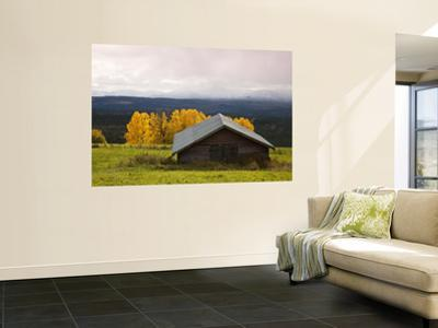 Traditional Wooden Barn, Yellow Aspens and Fjells with First Snow in Autumn