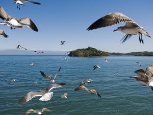 Birds Flying Along Ferry Ride Between Peninsula De Nicoya and Puntarenas. by Christian Aslund