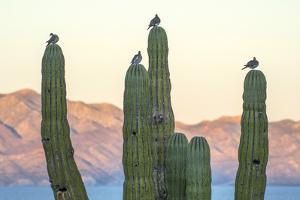 Mexico, Baja California, Sea of Cortez, La Ventana by Christian Heeb