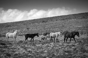 South America, Argentina, Patagonia, Santa Cruz, wild horses at Cueva de los Manos by Christian Heeb