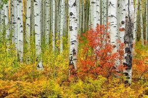 USA, Colorado, Aspen along McClure Pass in the Colorado Rockies by Christian Heeb
