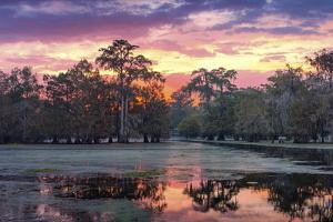USA, Louisiana, Jefferson Parish, Lafayette, Lake Martin by Christian Heeb