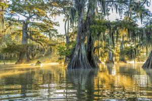 USA, Louisiana, Lake Fausse Pointe State Park is located in Iberia Parish, Louisiana and St. Martin by Christian Heeb