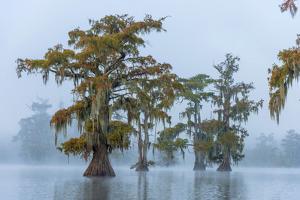USA, Louisiana, St.Martins Parish, Lake Martin by Christian Heeb