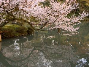 Cherry Blossom, Kenrokuen Garden, Kanazawa City, Ishigawa Prefecture, Honshu Island, Japan by Christian Kober