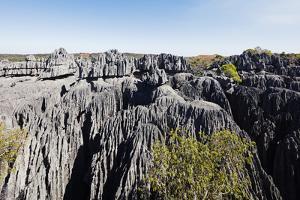 Grand Tsingy, Tsingy du Bemaraha National Park, UNESCO World Heritage Site, western area, Madagasca by Christian Kober