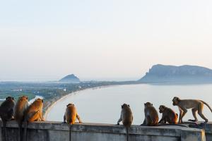 Macaque Monkey (Macaca), Khao Chong Krajok, Prachuap Kiri Khan, Thailand, Southeast Asia, Asia by Christian Kober