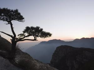 Pine Tree Silhouetted at Dusk on Lushan Mountain, Jiangxi Province by Christian Kober