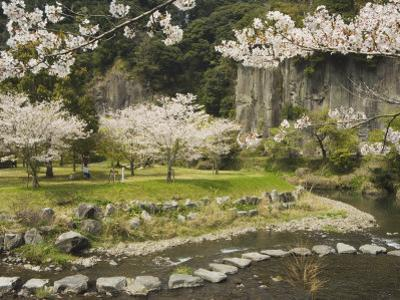 Spring Cherry Blossoms Near River with Stepping Stones, Kagoshima Prefecture, Kyushu, Japan