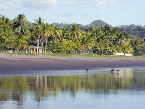 Vultures on the Beach at Playa Sihuapilapa, Pacific Coast, El Salvador, Central America by Christian Kober