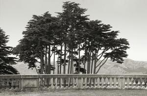 Cypress Trees and Balusters by Christian Peacock
