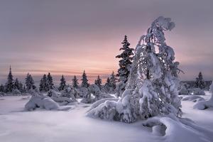 Lappland - Winterwonderland by Christian Schweiger