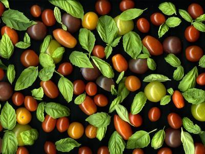 Organic Tomatoes and Basil Isolated