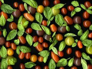 Organic Tomatoes and Basil Isolated by Christian Slanec
