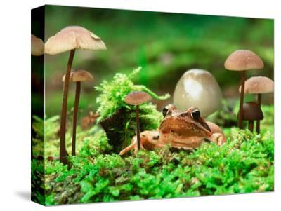 Small Toad Surrounded by Mushrooms, Jasmund National Park, Island of Ruegen, Germany