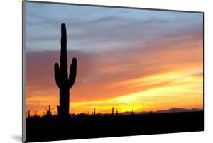Desert Sunset with Saguaro Cactus by Christina E