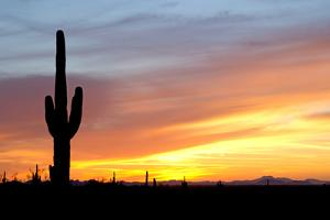 Desert Sunset with Saguaro Cactus by Christina E