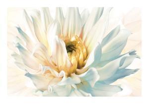 Painted Petals II by Christine Elizabeth