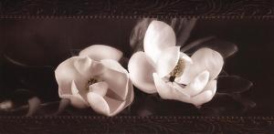 Soft Magnolias I by Christine Elizabeth