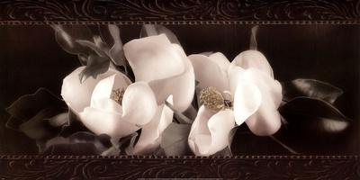 Soft Magnolias II
