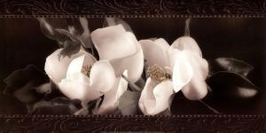 Soft Magnolias II by Christine Elizabeth