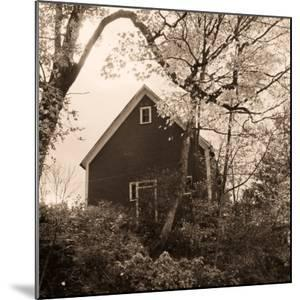 Bough and Barn by Christine Triebert