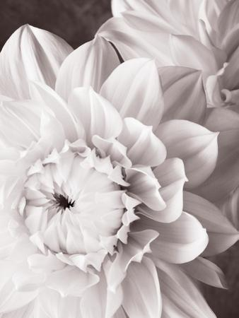 Black and White Dahlias I by Christine Zalewski