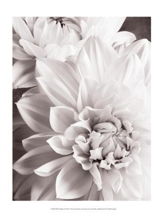 Black and White Dahlias II