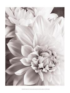 Black and White Dahlias II by Christine Zalewski