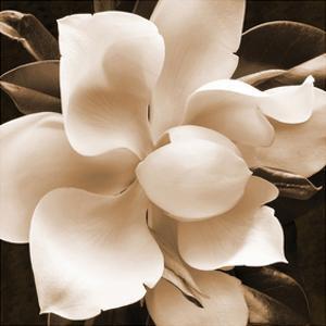 Magnolia Close Up II by Christine Zalewski