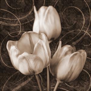 Sepia Tulip II by Christine Zalewski