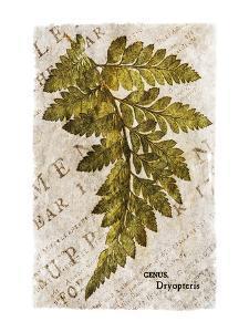 Vintage Fern: Genus Dryopteris, Wood Fern by Christine Zalewski
