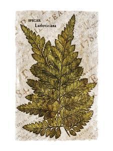 Vintage Fern: Species Ludoviciana, Southern Wood Fern by Christine Zalewski