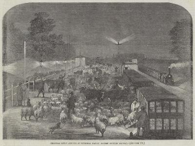 Christmas Cattle Arriving at Tottenham Station, Eastern Counties Railway--Giclee Print