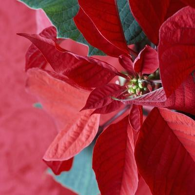 Christmas Decorations-Sean Justice-Photographic Print