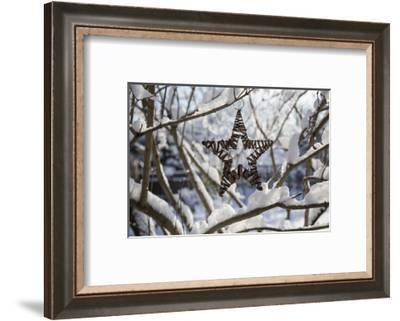 Christmas pendant in the snow, still life-Andrea Haase-Framed Photographic Print
