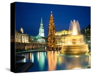 Christmas tree at Trafalgar Square, London, South England, Great Britain