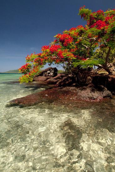 Christmas Tree at Vonu Point, Turtle Island, Yasawa Islands, Fiji-Roddy Scheer-Photographic Print