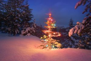Christmas Tree in Snow with Lights