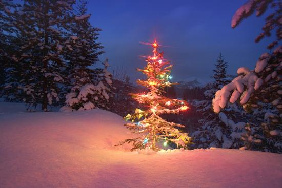 Christmas Tree in Snow with Lights--Photographic Print