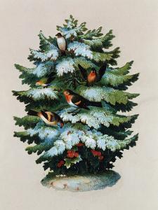 Christmas Tree, Robins and Holly, Postcard