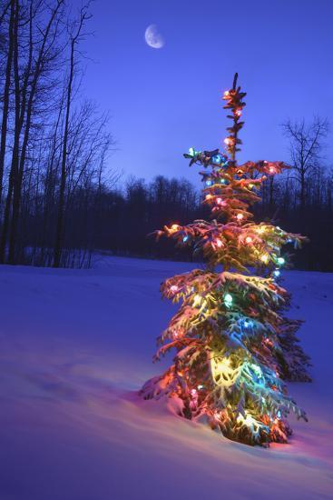 Christmas Tree--Photographic Print