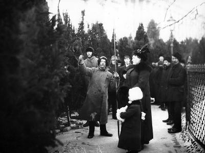 Christmas Trees for Sale, St Petersburg, C.1913--Photographic Print