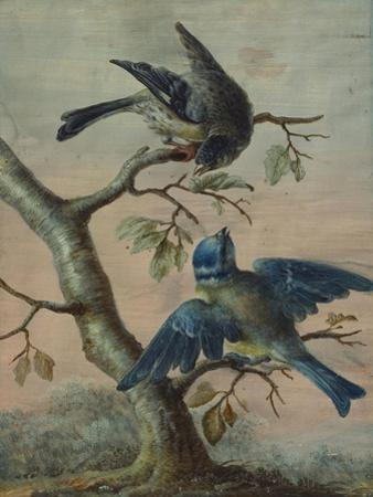 A Kingfisher on a Sapling; and a Blue Tit with a Finch on a Sapling by Christoph Ludwig Agricola